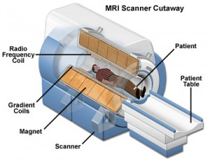 Cross Section MRI Scanner - National High Magnetic Field Laboratory